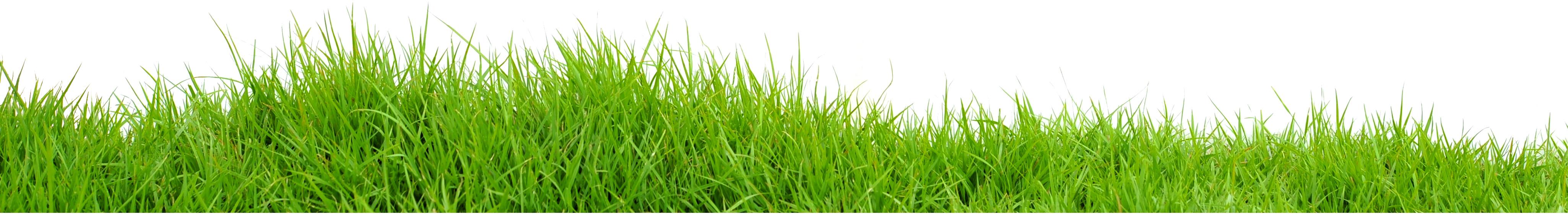 grass_PNG4935